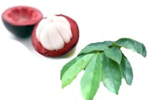tanaman obat diabetes melitus
